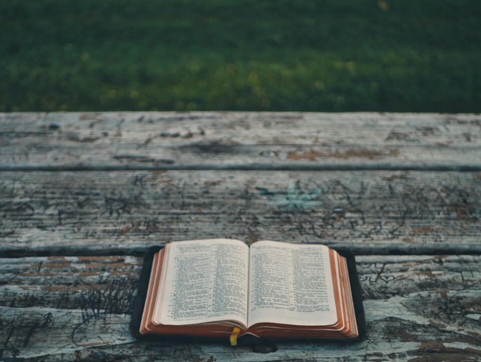 Ladies' Precept Study in Galatians